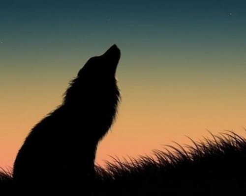 Wolf silhouetted aganst sky