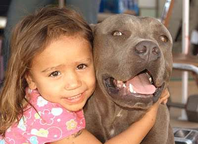 what-is-a-pit-bull_enhanced2